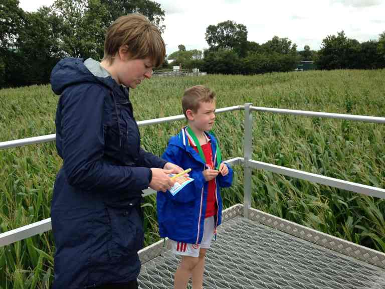 York Maze rating